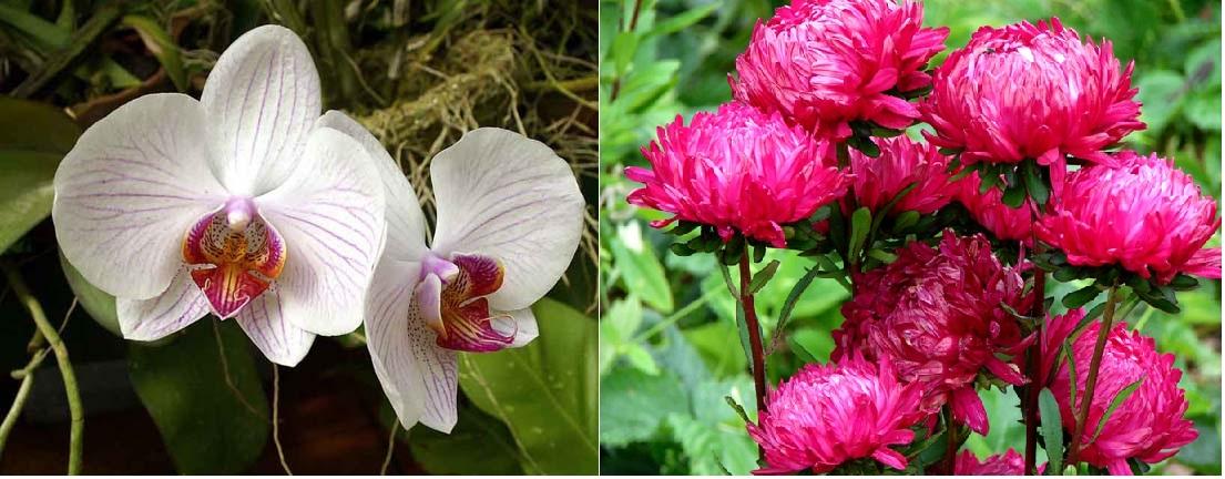 Стих от имени цветка