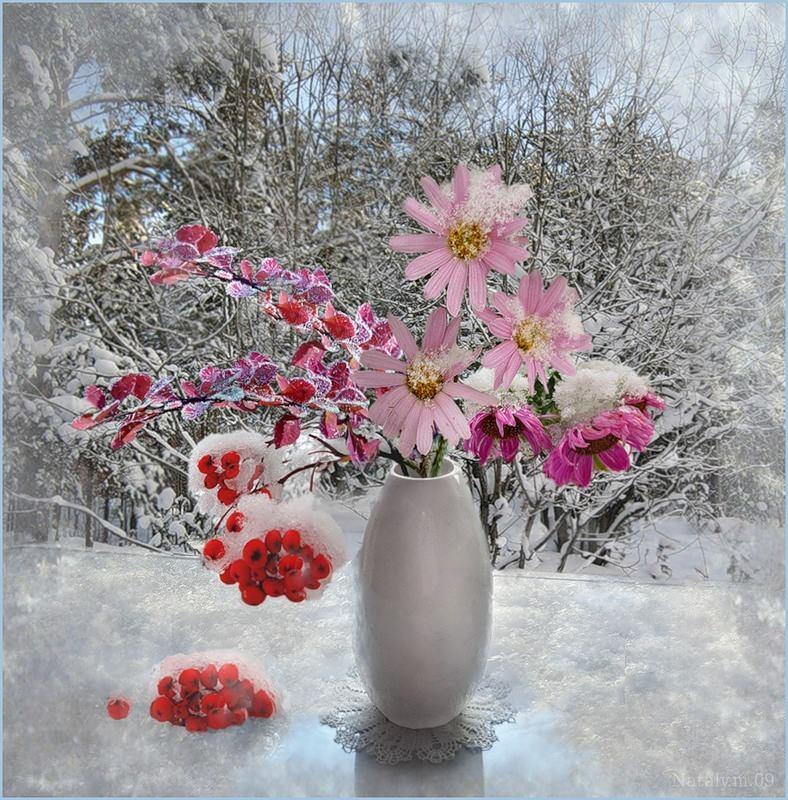 Открытка цветы в снегу, надписью может без
