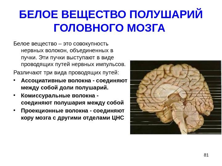 Поражение белого вещества головного мозга причины