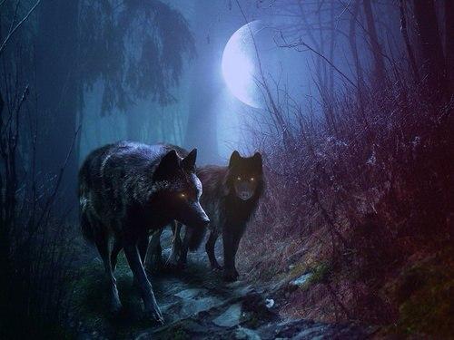день школьных с голодной волчицей выходит на дорогу любимая, подруга