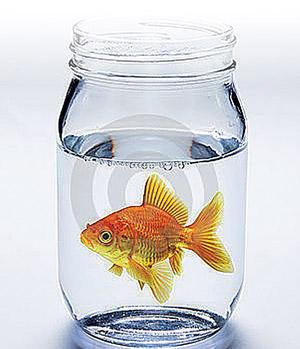 аквариумные рыбки и рыбалка