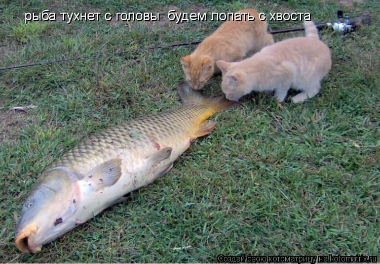 как кошки ловят рыбу текст