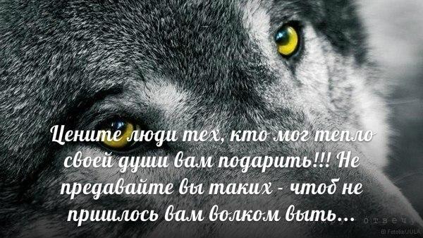 Цитата я как волк если с волчицей