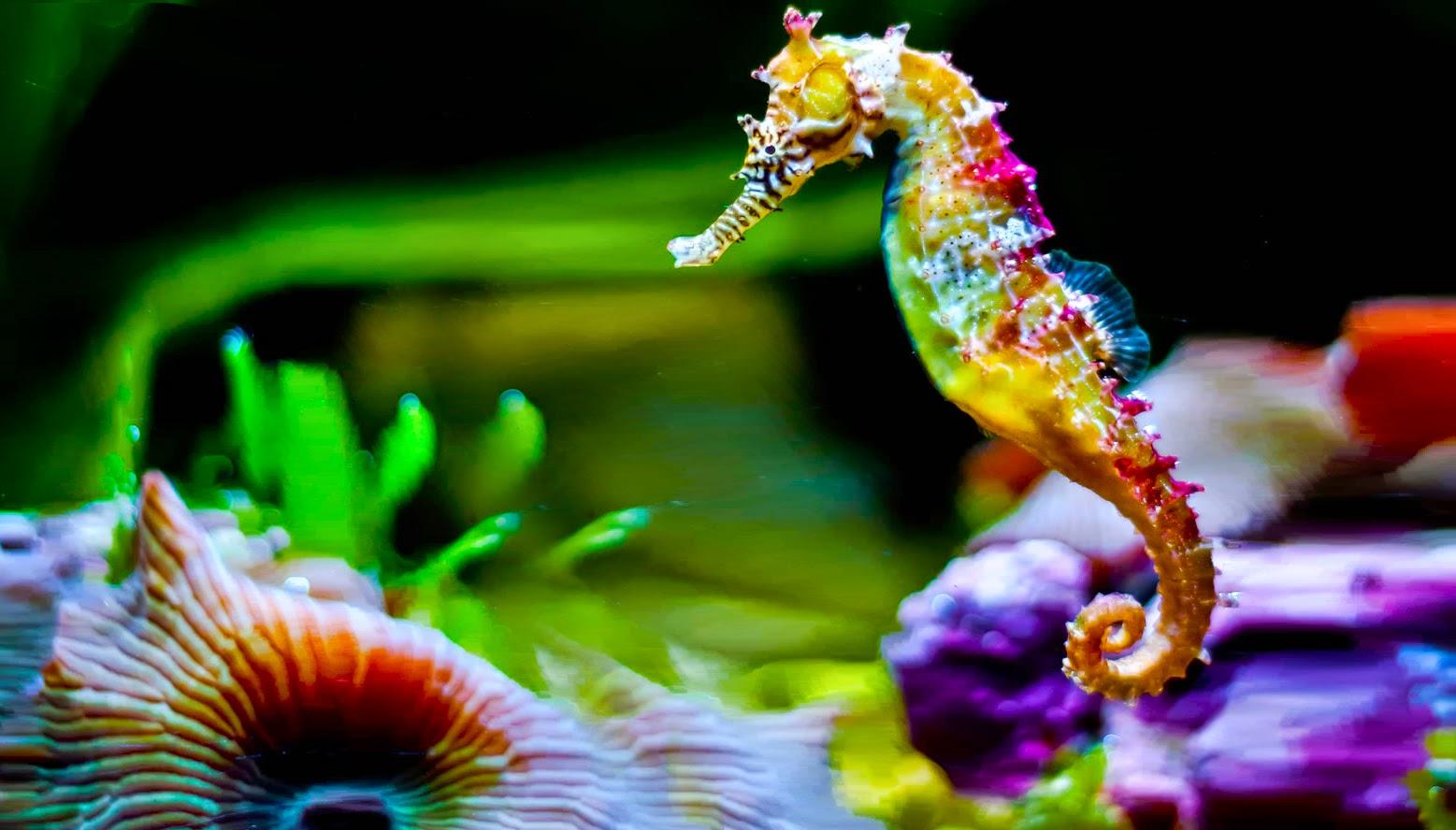 Ver fotos de caballos de mar