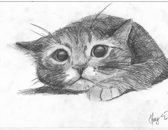 Карандашный рисунок с кошкой