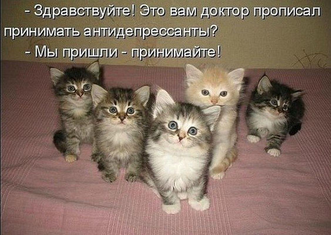 Цитаты про кошек милые