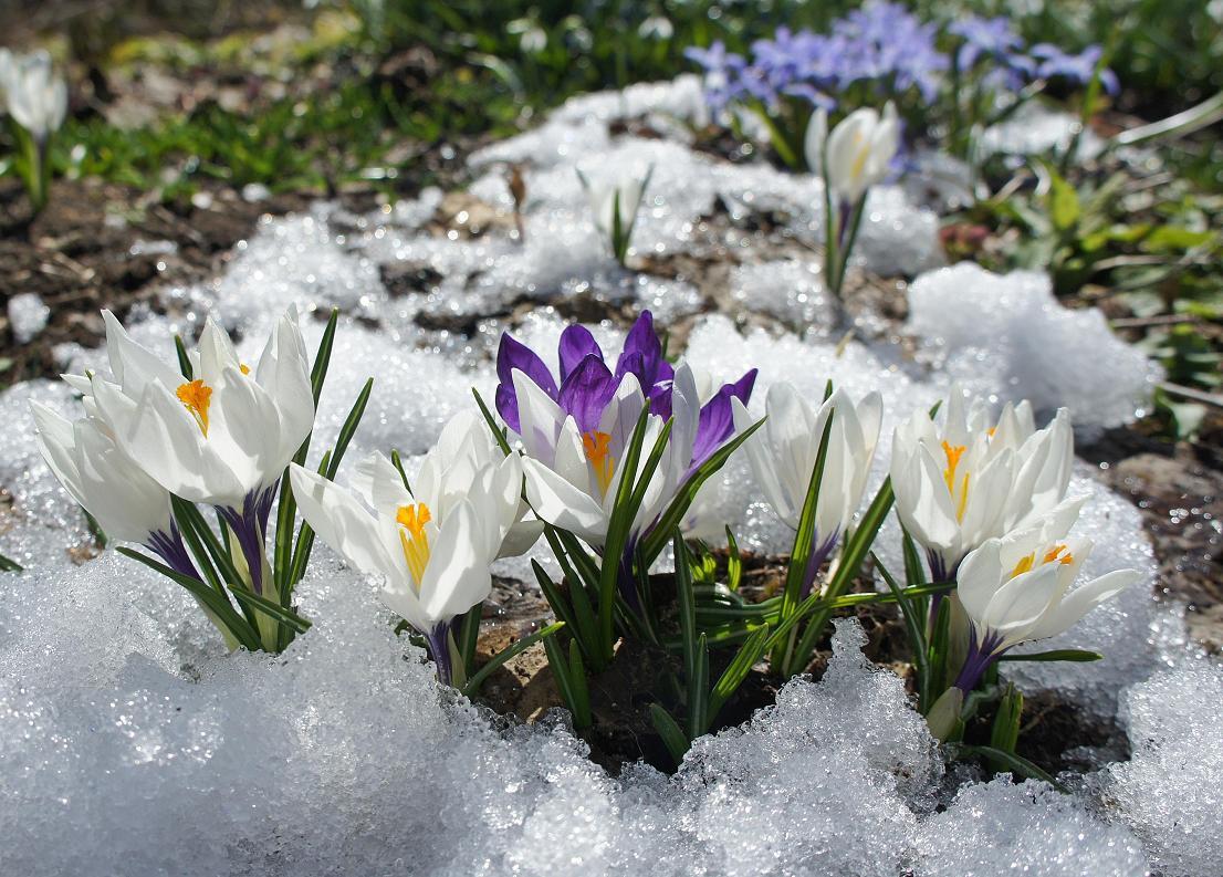 С первым снегом картинки с поздравления с фото 775