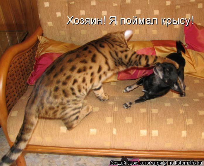 как ловить котов