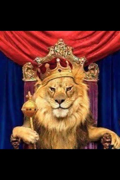 Король лев обои на рабочий стол