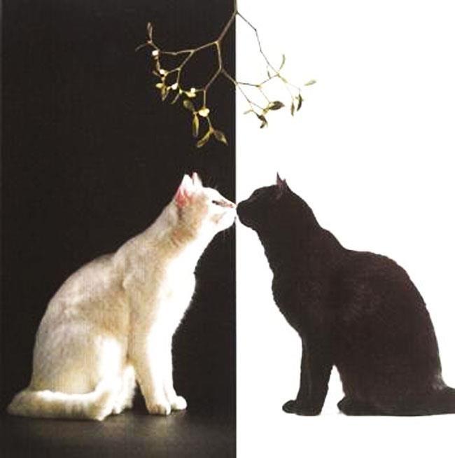 картинки белый кот и черный кот