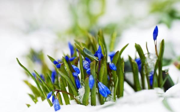 картинки на экран рабочего стола весна № 478058 загрузить