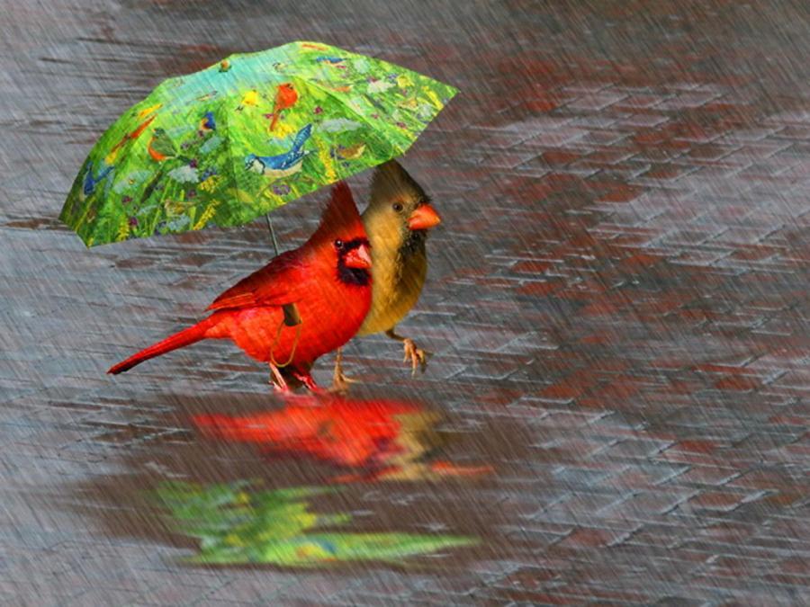 Дождливое лето смешные картинки, мая дню