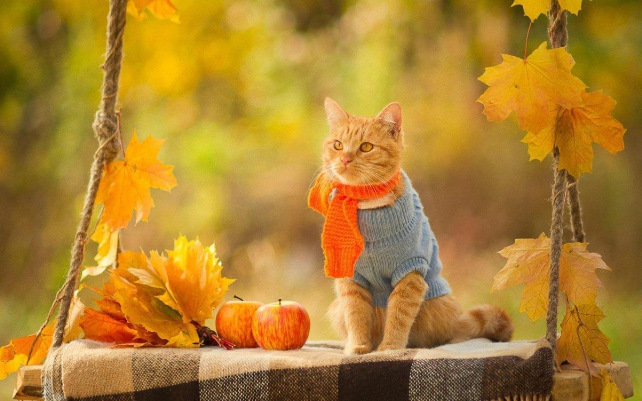 Осенний позитив в картинках