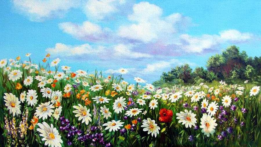 Рисунок ромашкового поля 182