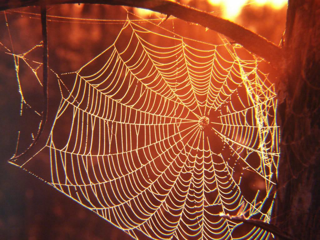 паучья обмет  интересах ловли мошек кроссворд