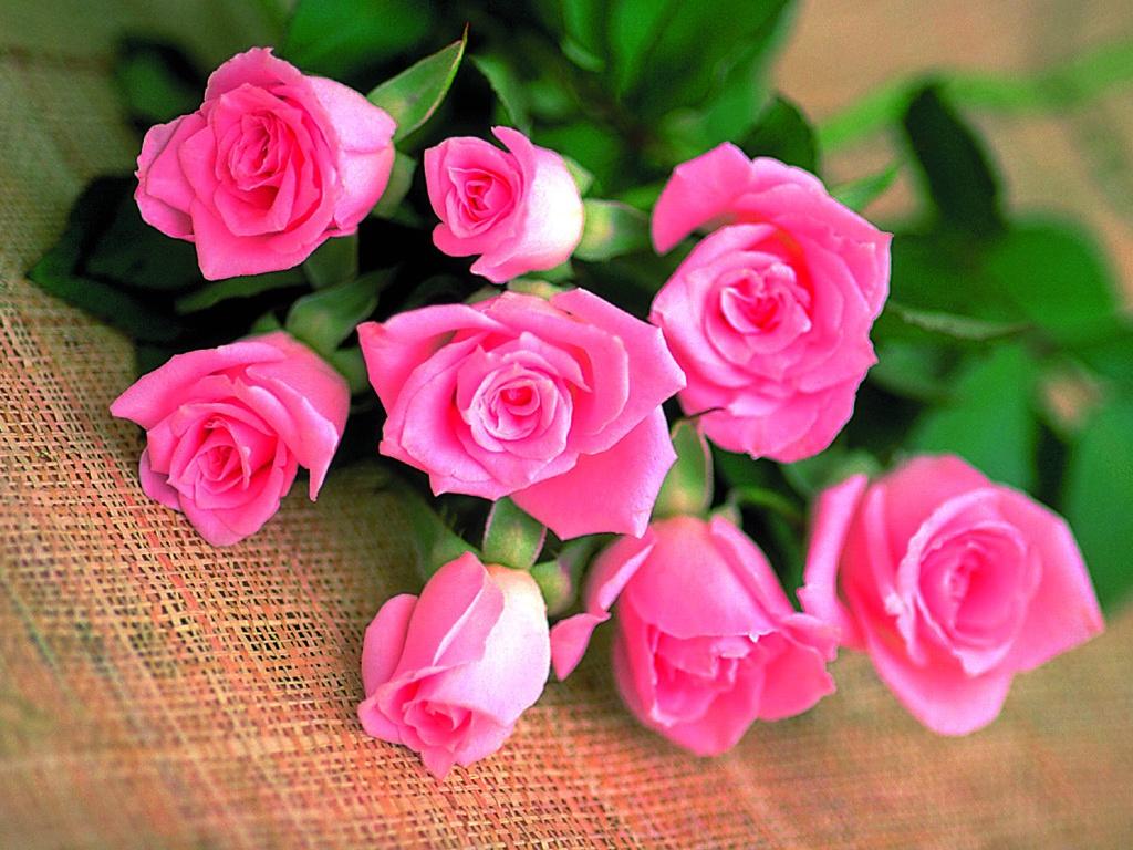 Фото открытка красивые цветы