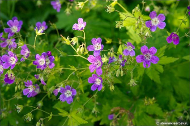 Флористов щёлково приглашают на цветы подмосковья