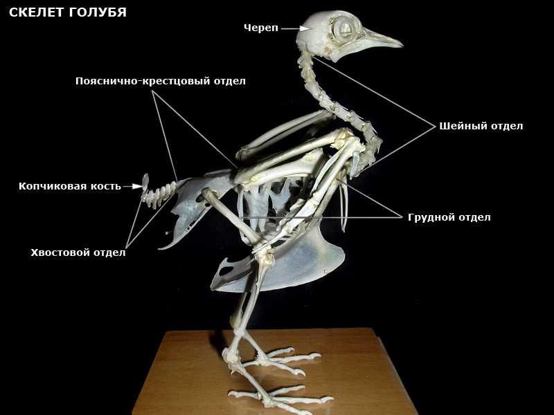 Три скелета под окном (Светлана Кабита) / Стихи.ру