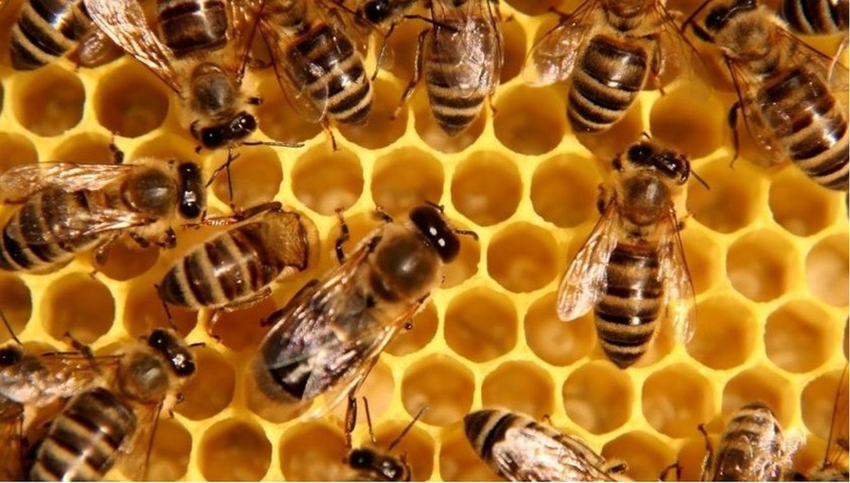 Картинка с пчелами
