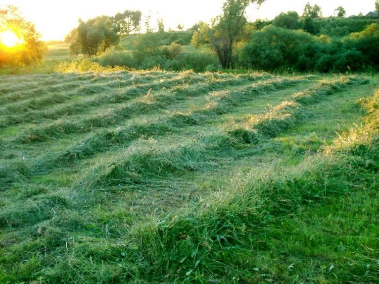 Почему траву на лугу надо скашивать от центра двигаясь по кругу