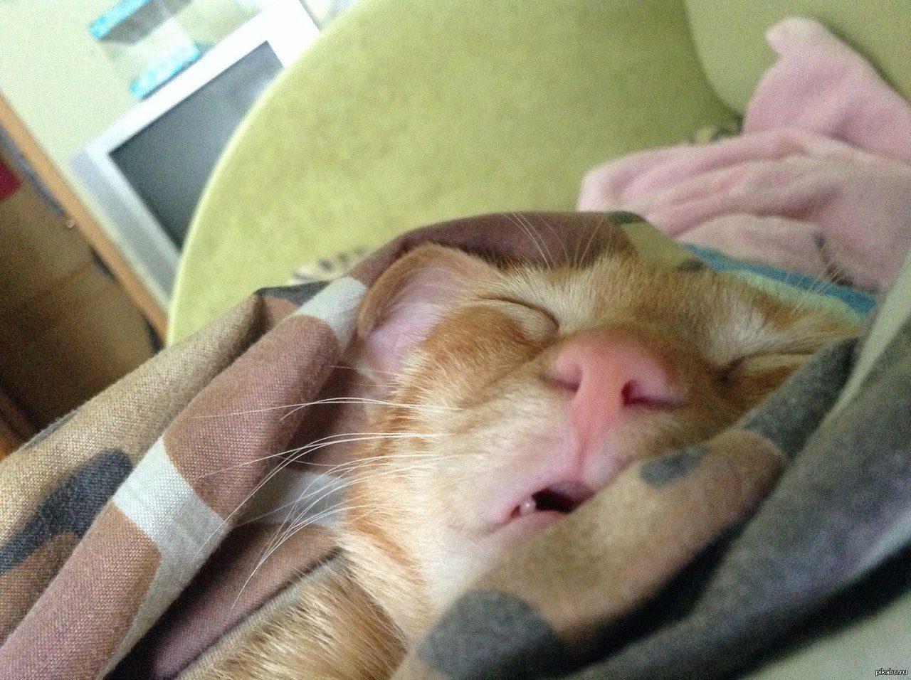 Я сплю картинки прикольные смешные