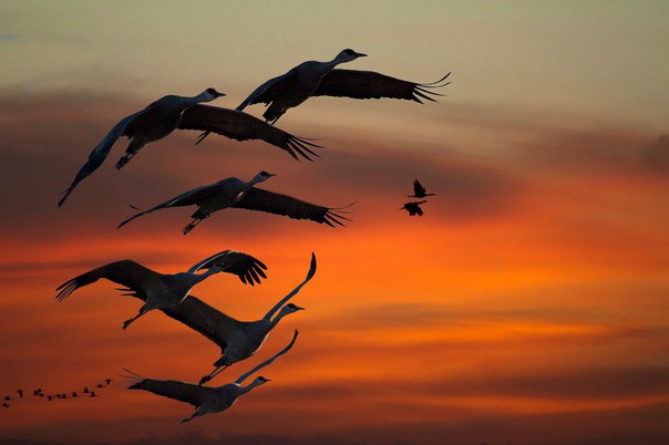 По опалённому небу летели журавли