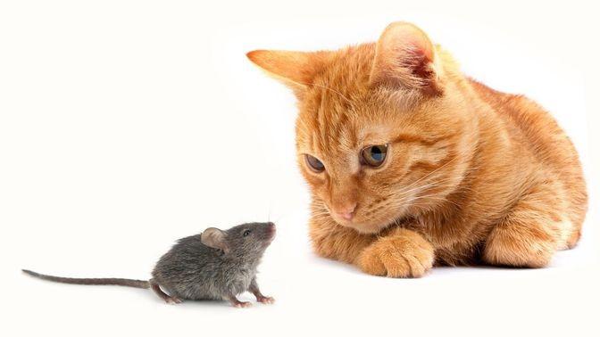 загадка кабы отлично кошек ловят число мышей вслед  пяток минут