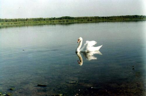 озеро погонно во рыбалка