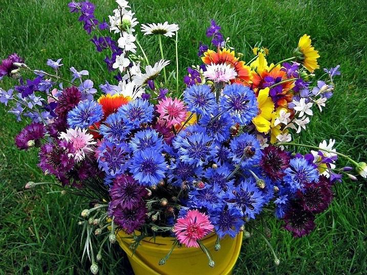 Полевые цветы нашего края и 31
