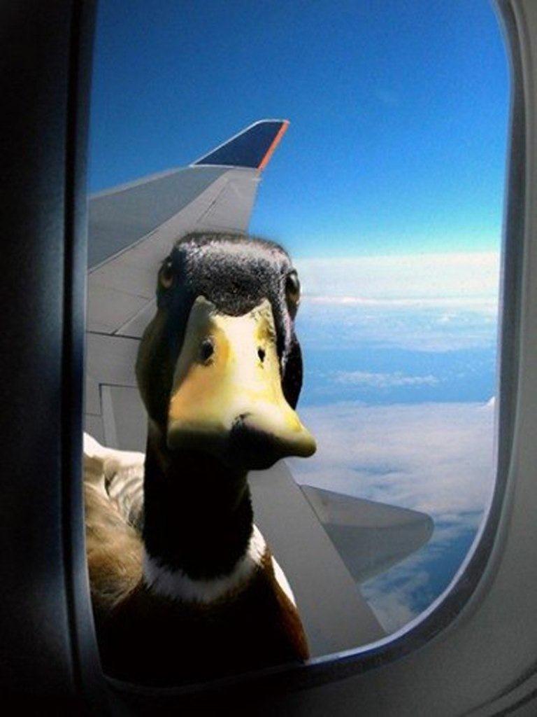 фото на вибер прикольные самолеты
