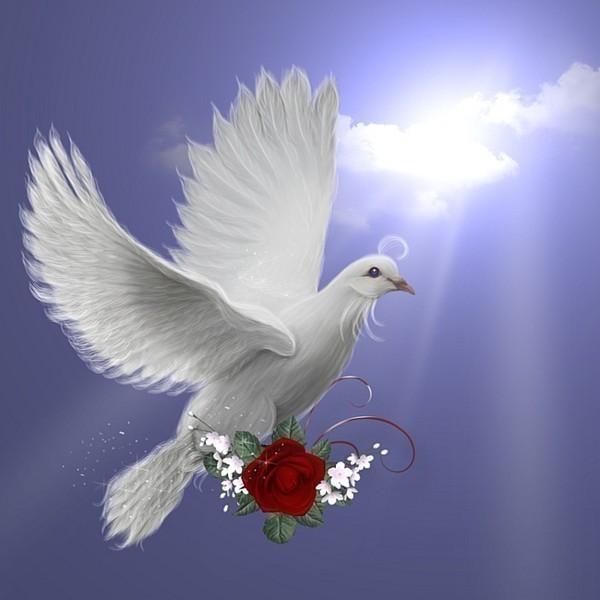 Фото открытки с голубями