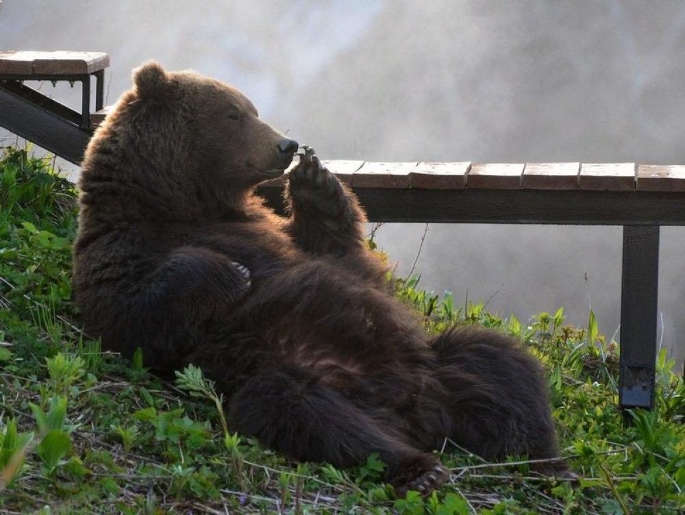 Картинка с медведем доброе утро