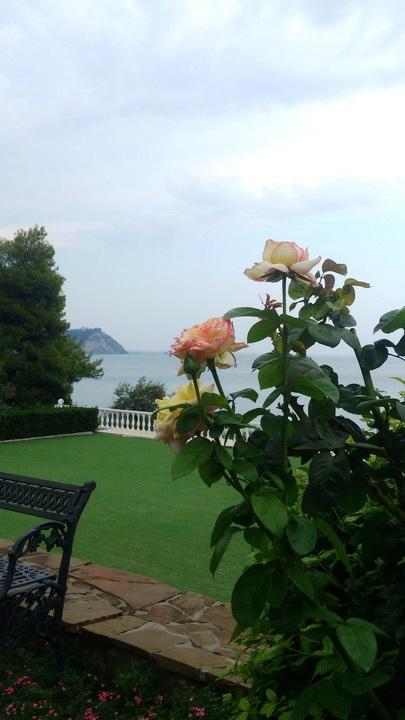 дальше картинки в парке чаир распускаются розы прочитали правила