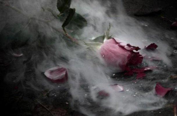 Скачать песню я эту розу сорвать готов