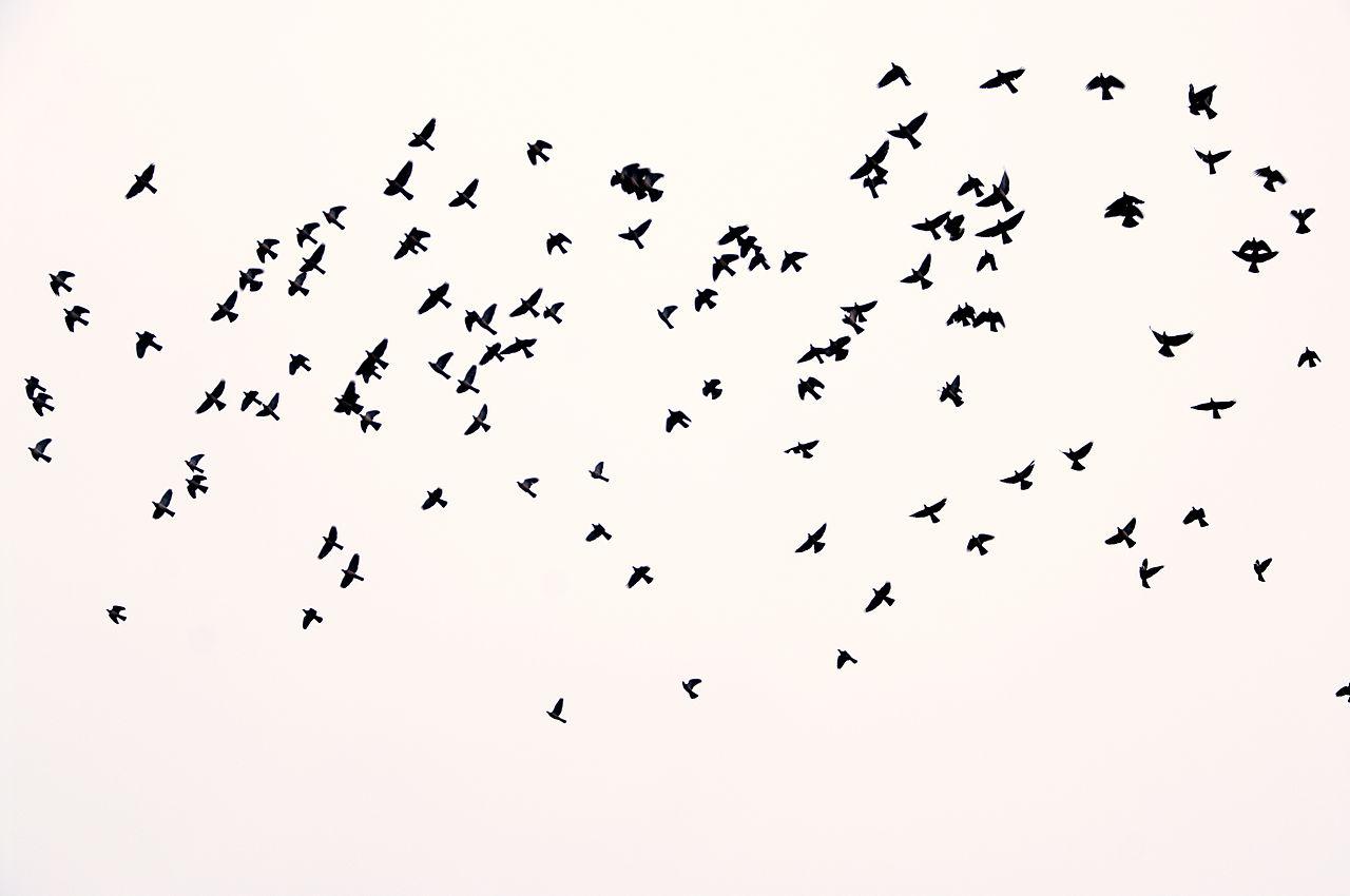 Birds flying background tumblr