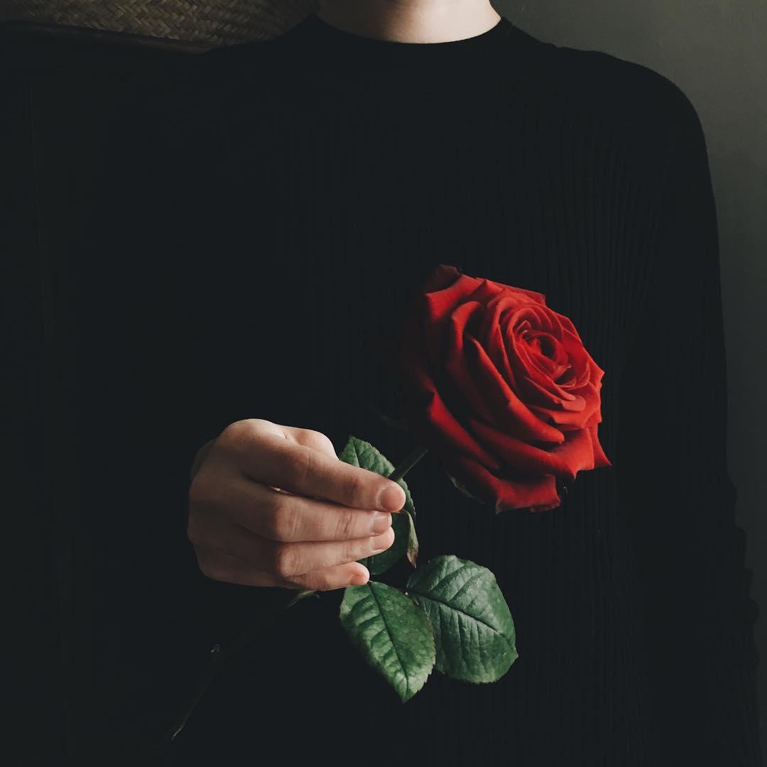 Фото розы 47