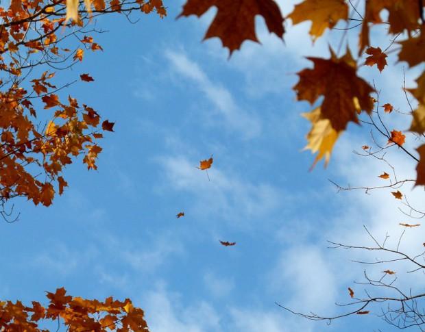 картинка улетающие листья открытки
