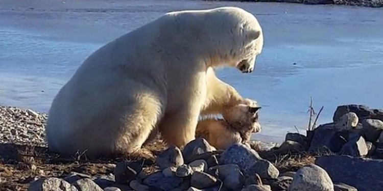 белый медведь гладит собаку по голове видео