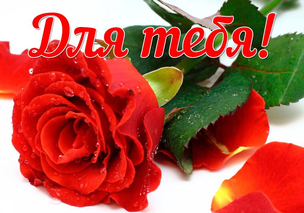 Фото открытка для женщины