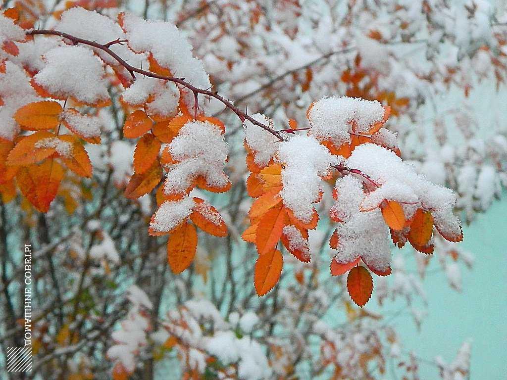 фото картинки осень снег выпал доброе утро гадюки иной рисунок