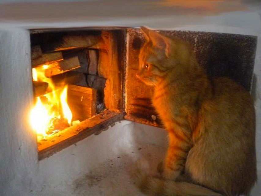 Картинки кот на печи