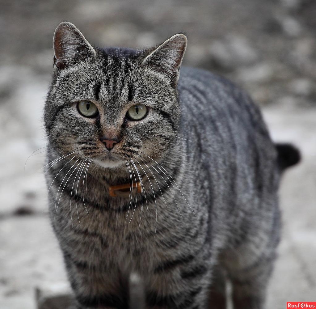 Смешные коты васька