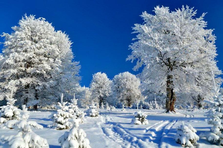 Веселые, картинка с первым днем зимы