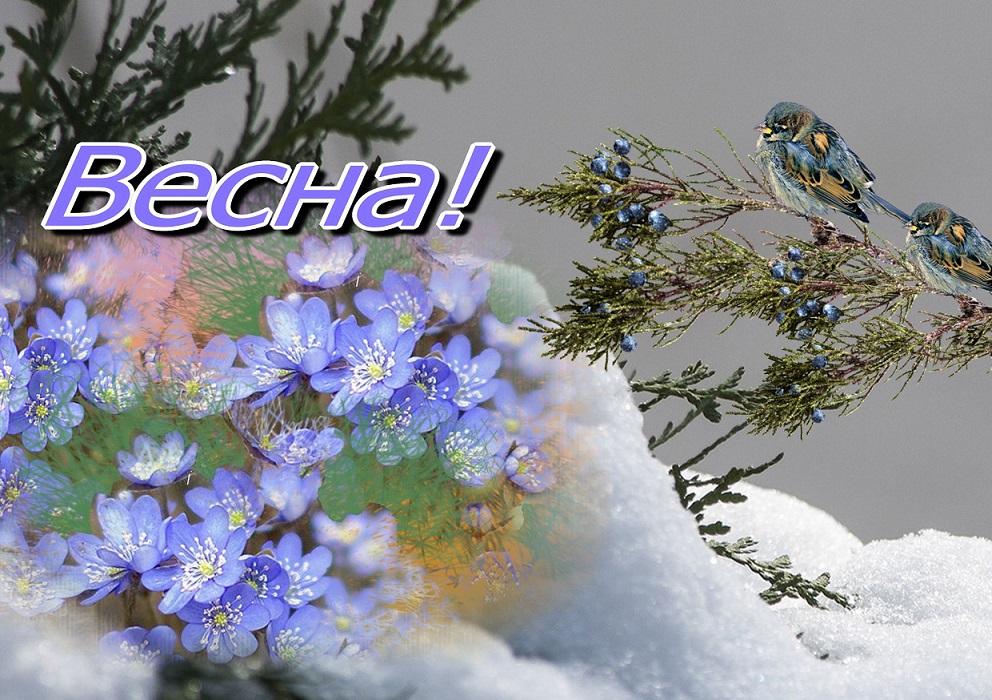 Весна пришла картинки открытки