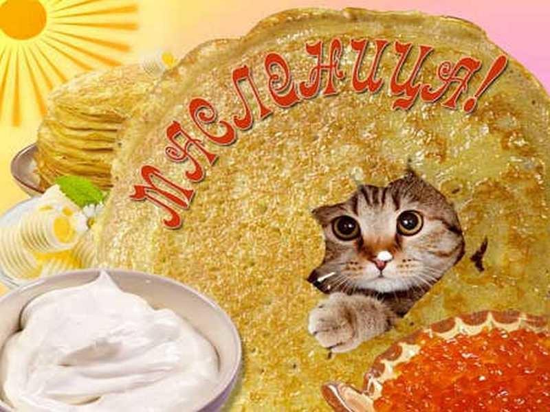 Открытка кот масленица, республики коми