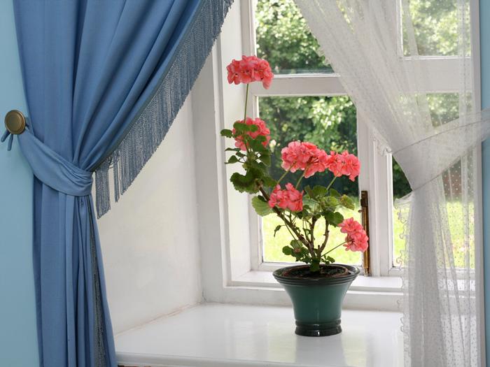 Почему не цветут цветы в доме