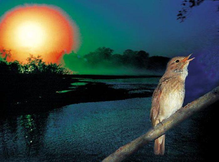 Рано утром на рассвете только птички запоют