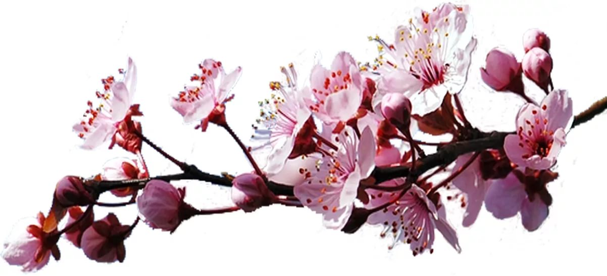 Скачать песню трио коса на камень цвела весна