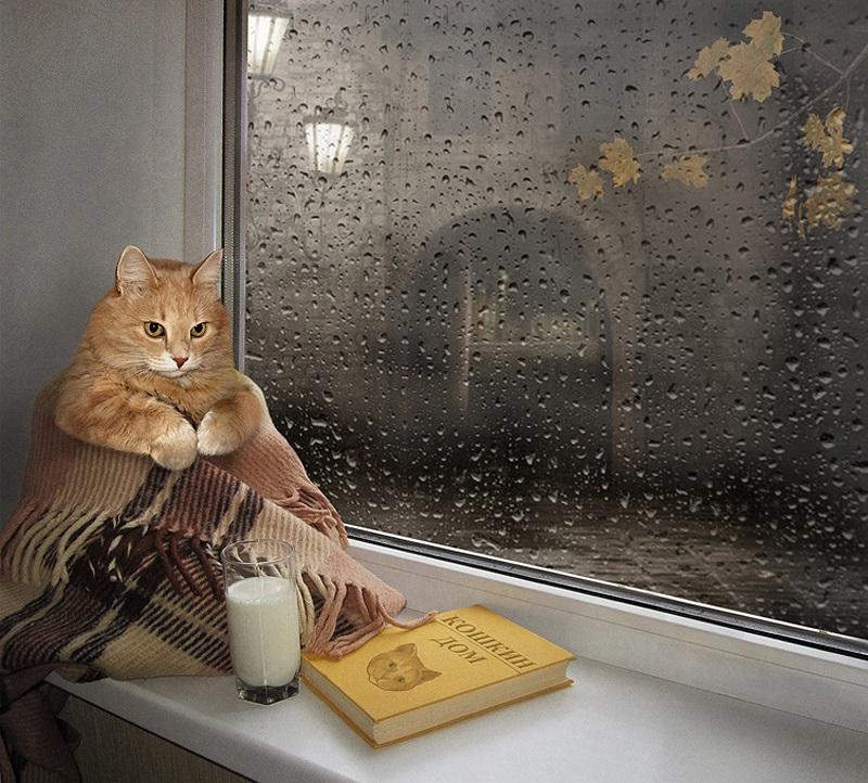 Открытки март, прикольные картинки осень дождь