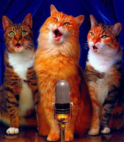 Скачать песню песня про ката
